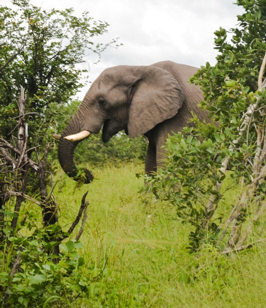 Hans Avis Safari Rental through Botswana