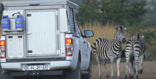 Safari adventure with alu-cab