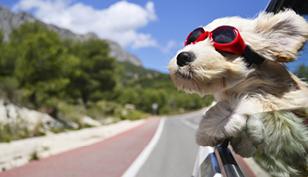 Lej bil med fri kilometer