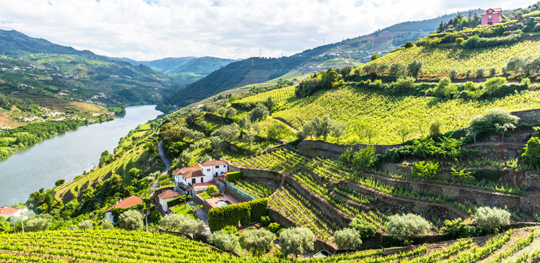 Duoro vineyards on a hillside