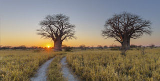 Avis Botswana Locations